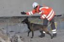 Rettungshundestaffel-010005-Amani