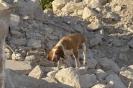 Rettungshundestaffel-010008-Amber