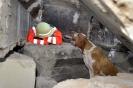 Rettungshundestaffel-010024-Amber