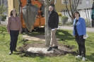 23.04.2021 - Großbaumverpflanzung